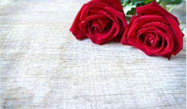 گلاب کے دوپھول