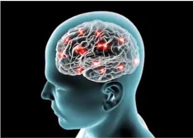 انسان اور اس کا دماغ