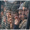 کشمیری نوجوان باڑ کے ساتھ کھڑے ہیں